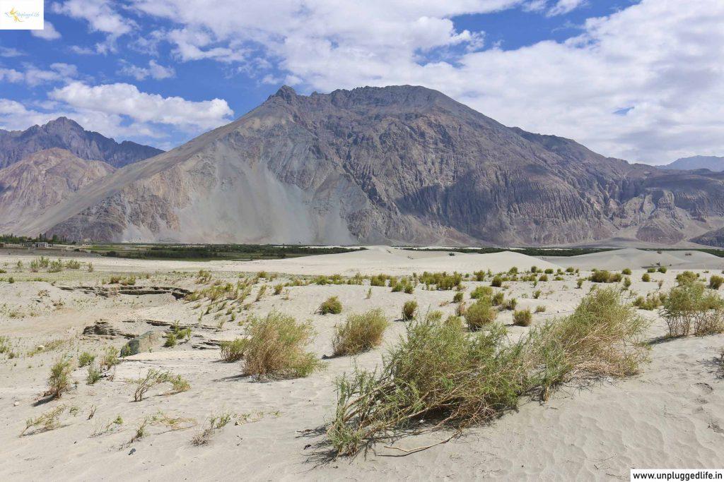 Unplugged Life, Himalayas, Ladakh, Leh View, View of Ladakh, Mountain View, Leh Ladakh Sightseeing Tour, Leh Ladakh Package, Book Ladakh Trip, Top Places in Ladakh, Sightseeing in Leh-Ladakh, Ladakh View, Leh Ladakh View, Landscape in Ladakh, Hunder Sand Dunes, Sand Dunes in Hunder Nubra Valley, Nubra Valley Sand Dunes, Sand Dunes in Nubra Valley, Nubra Valley Desert, Desert in Hunder Nubra Valley, Ladakh Sand Dunes, Leh to Nubra Valley, Nubra Valley to Leh, Leh to Hunder, Diskit to Leh, Leh to Diskit