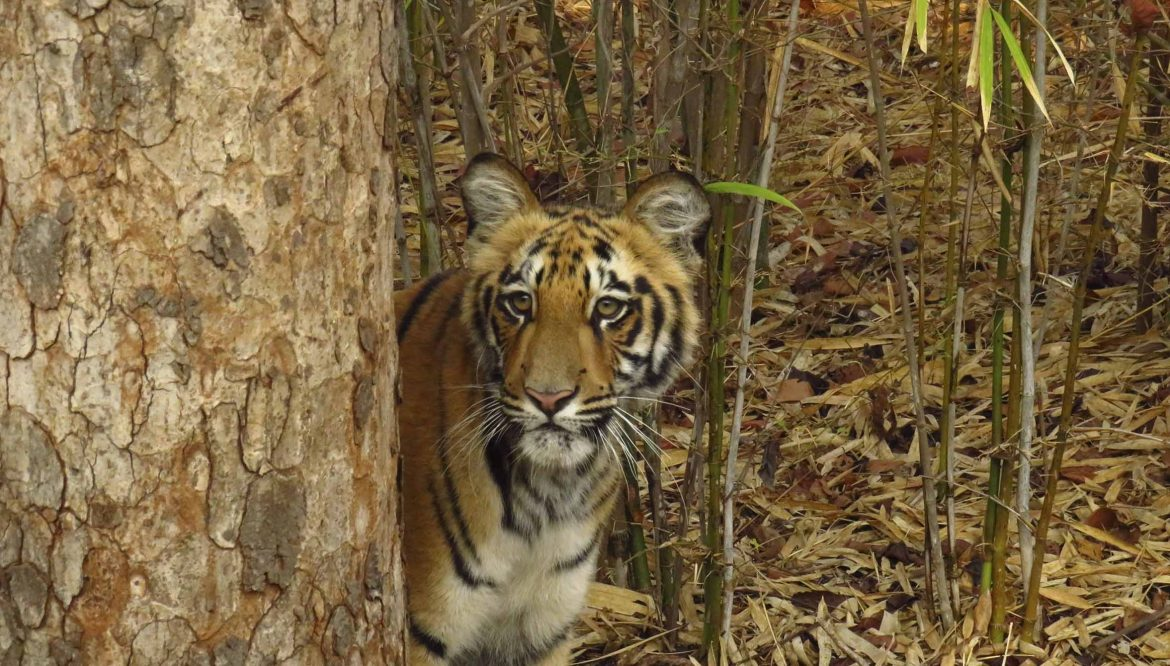 4 DAYS TOUR AT PENCH NATIONAL PARK