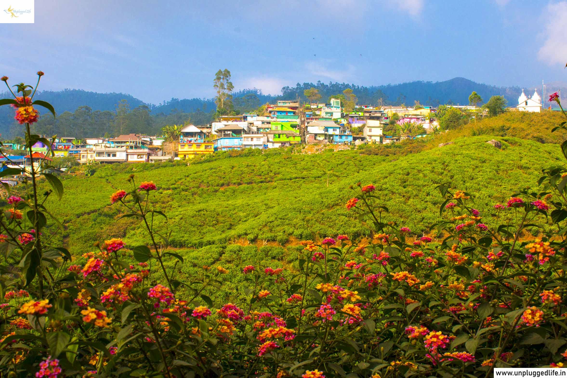 Unplugged Life, Munnar, Kerala, Travel to Kerala, Kochi to Kerala, Explore Munnar, Munnar Sightseeing, Canvas, Paining, Kerala Photography Tour, 7 days kerala itinerary, kerala package