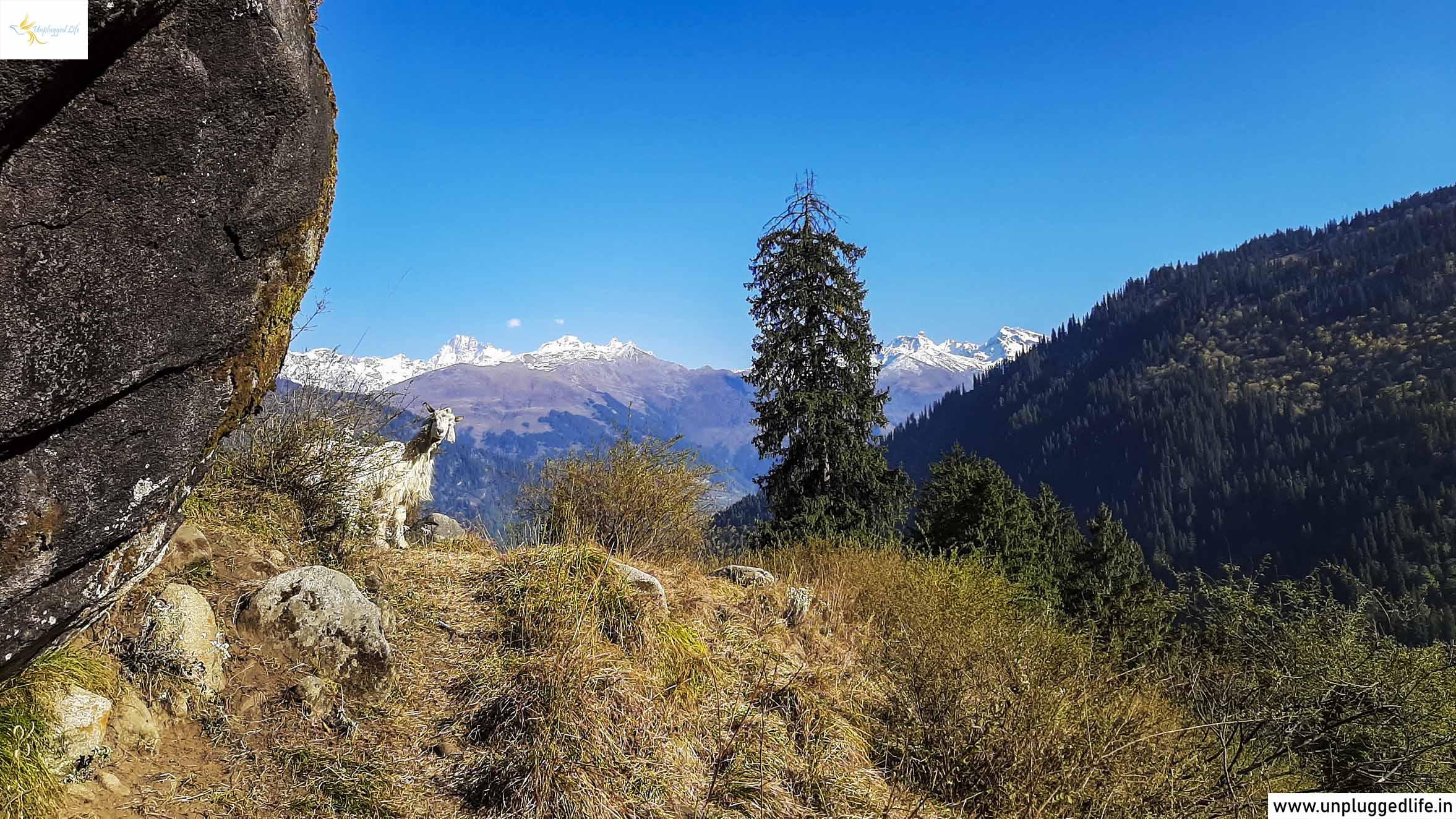 Manali, Chandigarh to Manali, Manali to Leh Ladakh, Manali to Jispa, Himachal Pradesh, Himalayas, Manali to Keylong, Manali to Sarchu, Jispa to Sarchu, Keylong to Sarchu, Manali to Rohtang Pass, Chandigarh to Leh Ladakh, Ladakh by Road, Ladakh Overland, Drive to Leh Ladakh, Leh Ladakh Tour Package, Ladakh Tour, Mountain View, View of Himalaya
